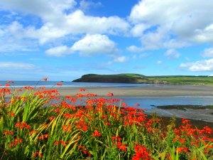 The Old Swan Inn, a delightful 2-bedroom, 1-bathroom cottage between the Mountains and the coast in Pembrokeshire, Wales. - Pembrokeshire, Non US or Canada, Wales